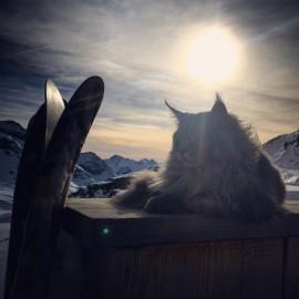 Il gatto delle nevi è pronto. Si riparte l'8 dicembre